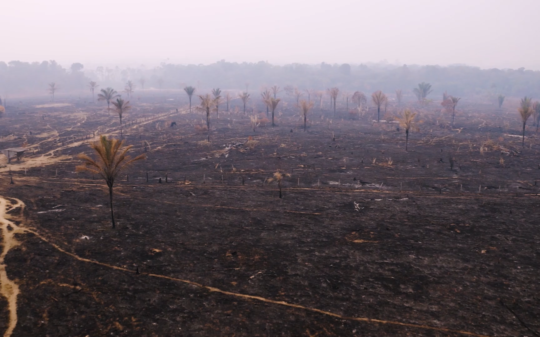 Incendi in Amazzonia - Greenpeace